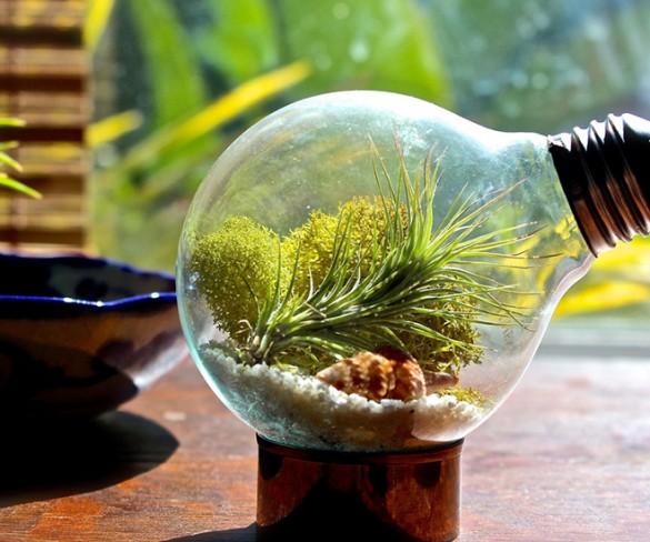 Creiamo un terrarium