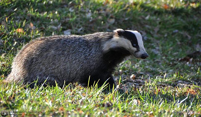 Tracce e orme, alla scoperta degli animali del bosco