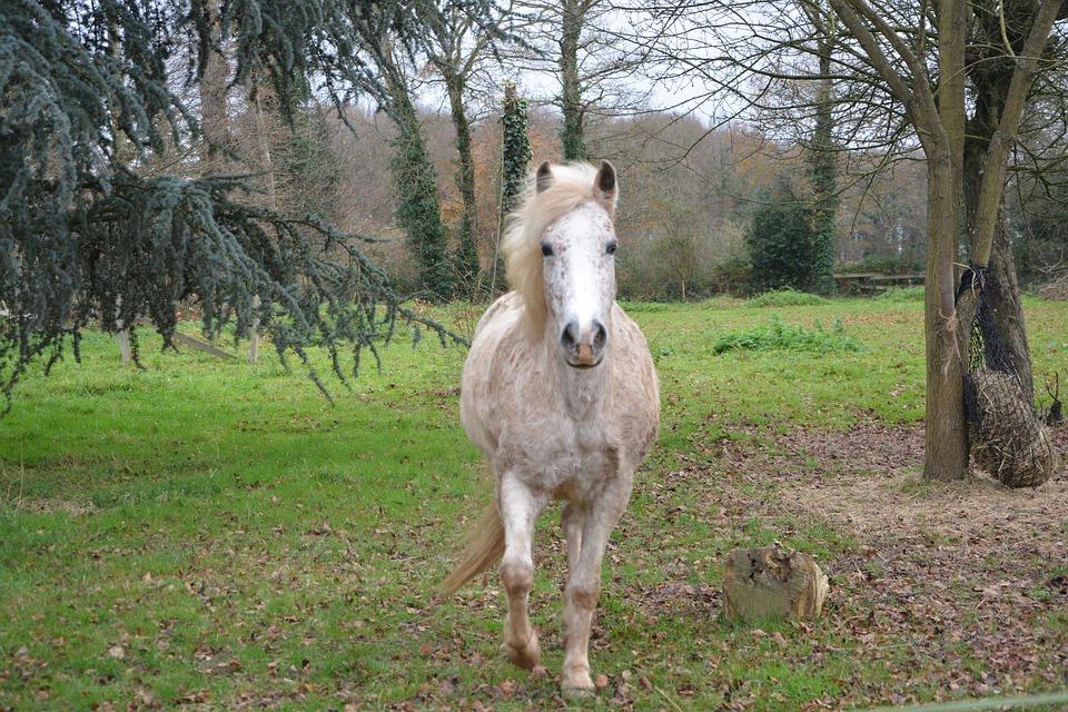 Una domenica per passeggiare a cavallo al Rifugio Lagdei