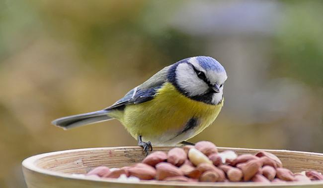 Un ristorante per gli uccelli: i bambini alla Riserva dei Ghirardi