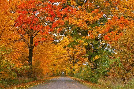 I colori dell'autunno tra Canossa e Vetto
