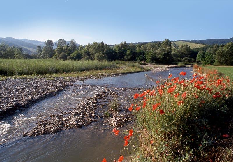 Domenica 1 Novembre: alla ricerca di fossili sul Torrente Stirone