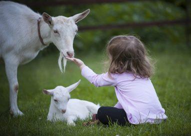 Progetto pastorizia: aiutare i bambini con fragilità grazie alle pecore
